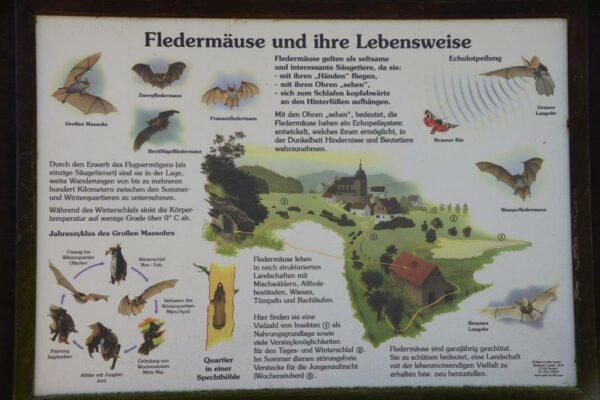Fledermaus-Info!