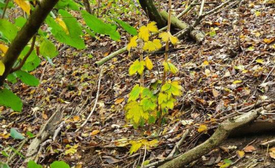 Hoffnung im Herbst